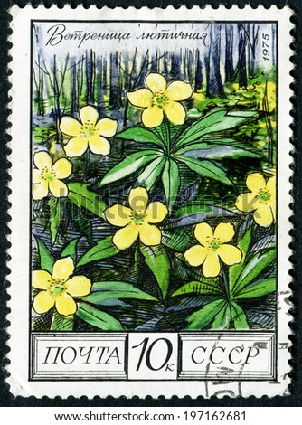 RUSSIA - CIRCA 1975: stamp printed in USSR (CCCP, soviet union) shows image of buttercups (ranunculus), oak forest from regional flowers series, Scott 4396 A2090 10k black yellow green, circa 1975 - stock photo