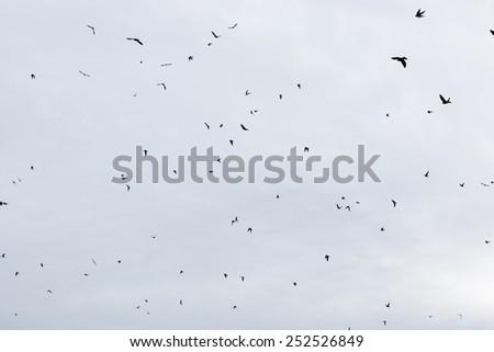 Russia, the Ryazan region (Ryazanskaya oblast), the Pronsky District, Denisovo. Barn Swallow (Hirundo rustica) - stock photo