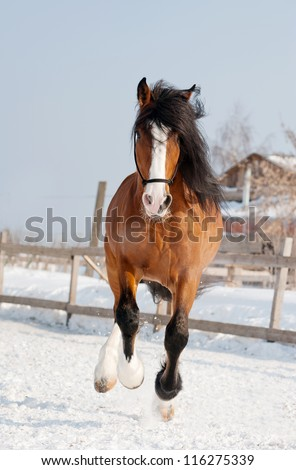 russian draft horse in the winter - stock photo