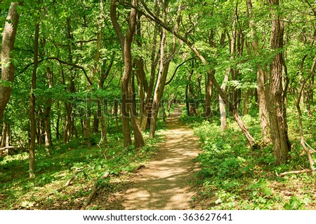 Russian green forest in summer. May be use likt background