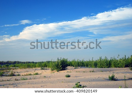 Russian nature. Sandy ground, green plants, blue sky with clouds background. Taken in Astrakhan region, Russia.