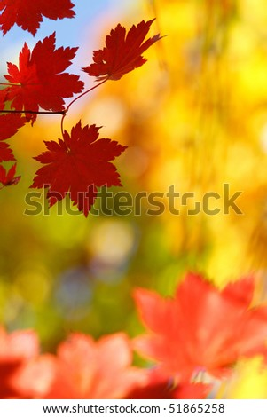 Russian,Primorye, Vladivostok. Botanical garden - stock photo