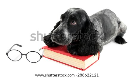 Russian spaniel with book and glasses isolated on white - stock photo