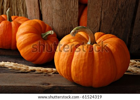 Rustic autumn still life with mini pumpkins on old wood with vintage basket in background.  Macro with shallow dof. - stock photo