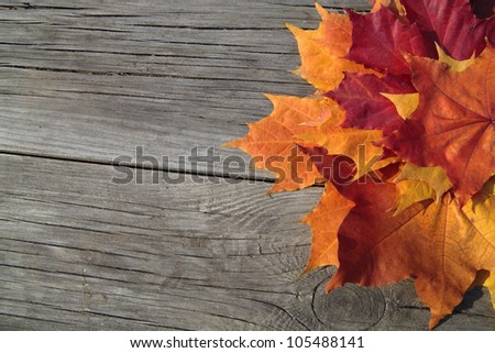 Rustic Autumn Theme As A Background With Colorful Maple Leaves On Weathered Wooden Planks