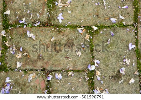 Rustic brick patio blocks with fallen remnants of wisteria blossoms.