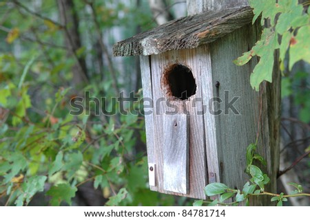 Rustic Forest Bird House
