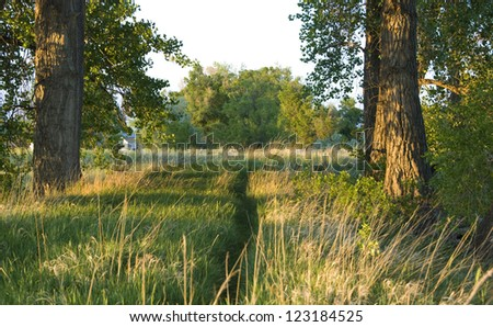 Rustic path meanders forward between cottonwood trees towards a grassy field - stock photo