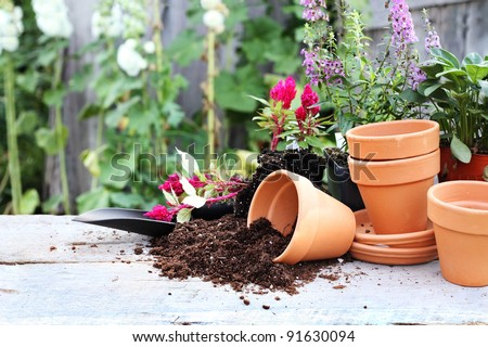 Rustic table with flower pots, potting soil, trowel and plants in front of an old weathered gardening shed. - stock photo
