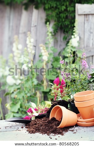 Rustic table with terracotta pots, potting soil, trowel and flowers in front of an old weathered gardening shed. - stock photo