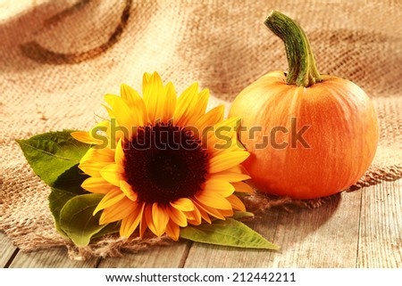 Rustic Thanksgiving background with copyspace and a colorful yellow sunflower with a fresh pumpkin on woven hessian textile - stock photo