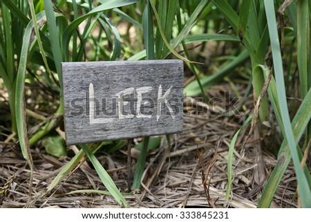 Rustic Vegetable markers, Leek - stock photo