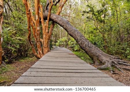 Rustic wood path on Patagonia. Puelo Lake national Park, El Bolson, Chubut, Argentina - stock photo