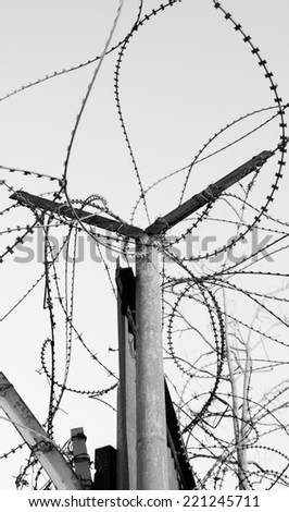 Rusty barbed wire against blue sky. A tree with bare twigs at background. War and imprisonment concepts. Aged photo. Black and white. - stock photo
