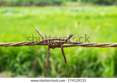 Rusty barbed wire fence on green background