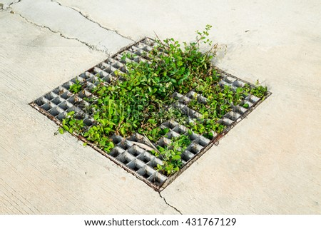 Rusty iron grille with green grass on cement road - stock photo
