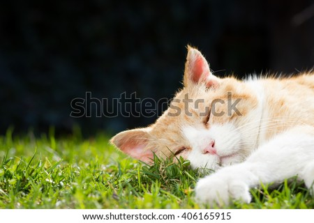 Rusty lovely cat relaxing on the huge botanic garden during beautiful spring sunset; looking happy (focus on eyes, color toned image) - stock photo