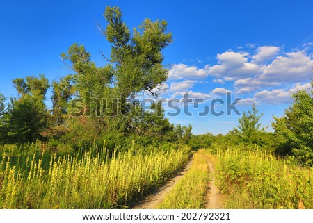 rut road across nice summer meadow - stock photo