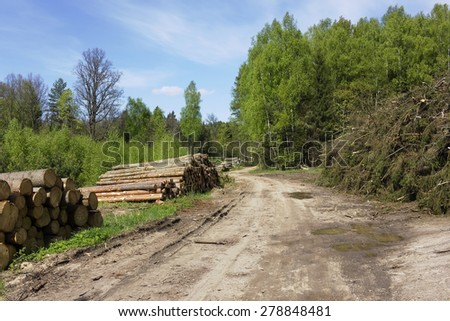 Ruthless deforestation  of the pine wood on logging landscape. Sunny spring day