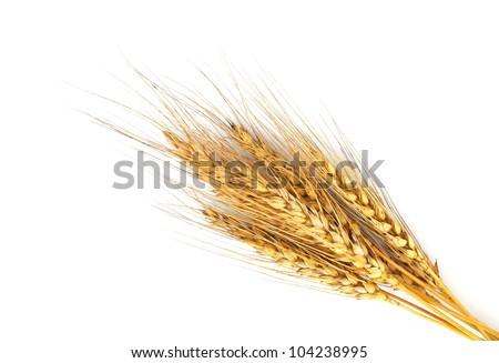 Rye ears isolated on white background - stock photo