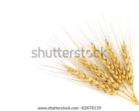 Rye ears isolated on white background - stock photo