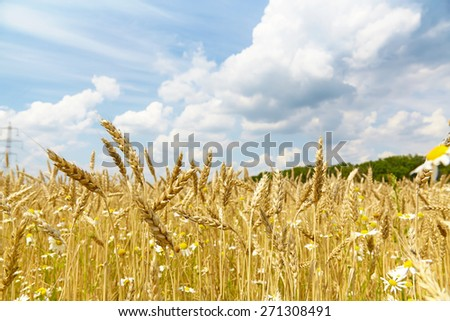 rye on a background of clouds - stock photo