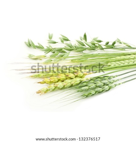 Rye, wheat, oat ears isolated on white