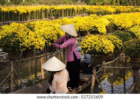 Sa Dec, Dong Thap Province, Vietnam - Febuary 07, 2015: Womans in Vietnamese conical hat are using sampan to harvest daisy pots in Sa Dec Flower village. Preparing for sell at the days before Tet