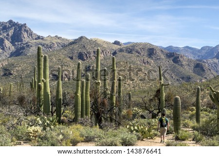 Sabino Canyon in Tucson Arizona - stock photo