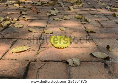 Sacred leaf on brick with reflect of sunlight  - stock photo