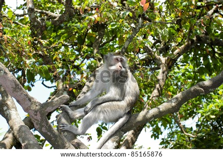 Sacred Monkey Forest in Ubud Bali Indonesia. - stock photo