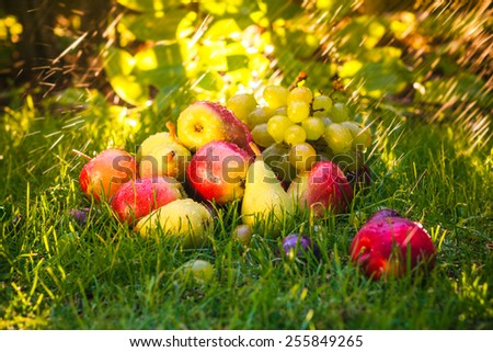 Sad autumn fruits in the grass in the sunshine - stock photo