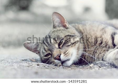 sad cat - stock photo