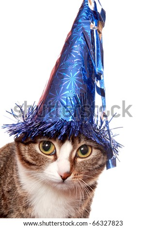 "Sad cat in a festive hat, or ""feast was over"" - stock photo"