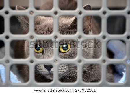 Sad cat looking up through the bars of his cage - stock photo