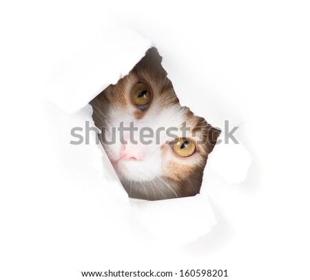 Sad cat peeking through a hole in a paper - stock photo