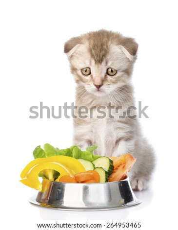 Sad cat sitting with a bowl of vegetables. isolated on white background - stock photo