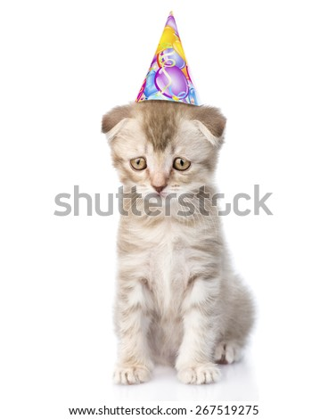 Sad cat with birthday hat. isolated on white background - stock photo