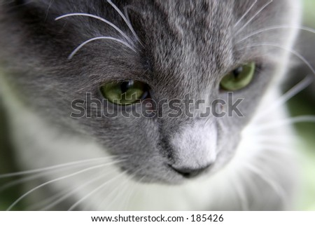 Sad cat with green eyes - stock photo