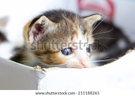 Sad cute kitten - stock photo