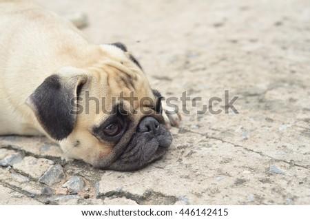 sad dog - stock photo