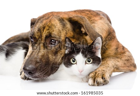 Sad dog and cat together. isolated on white background - stock photo