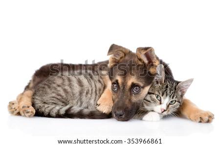 Sad dog hugging tabby cat. isolated on white background - stock photo