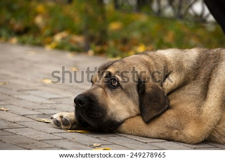 sad dog is waiting for the host - stock photo