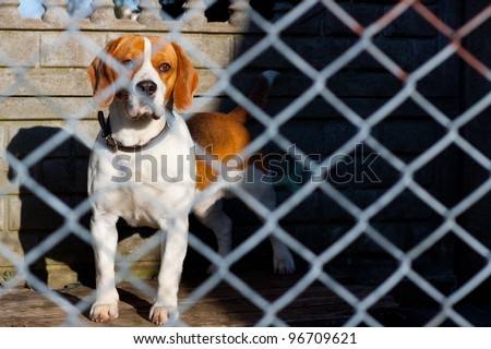 sad dog locked in a cage - stock photo