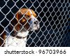 Sad dog locked in cage - stock photo