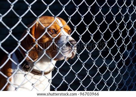 Sad dog locked in cage - stock photo