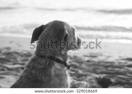 sad dog looking at the sea in black and white - stock photo