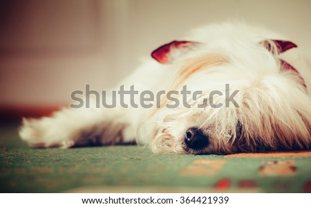 Sad dog lying on the floor/Sad dog - stock photo