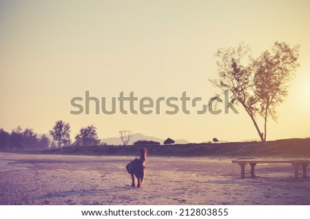 Sad dog on the beach - vintage color - stock photo
